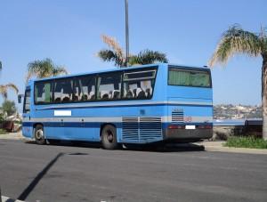 pizzoli due bus