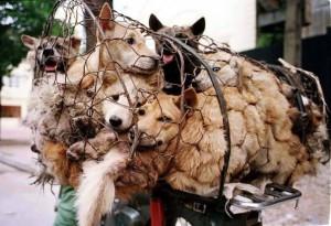 strage cani e gatti cina-2