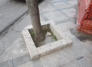albero umberto I