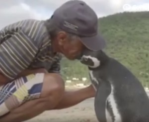 pinguino dindin