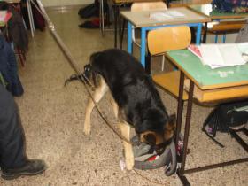 1460111699027.jpg--controllo_a_scuola_con_cani_anti_drogaa_catanzaro_segnalato_un_ragazzo