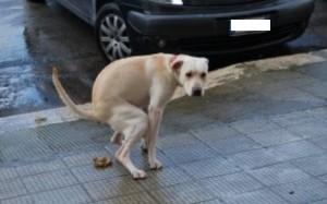 cane-che-fa-la-cacca-300x200